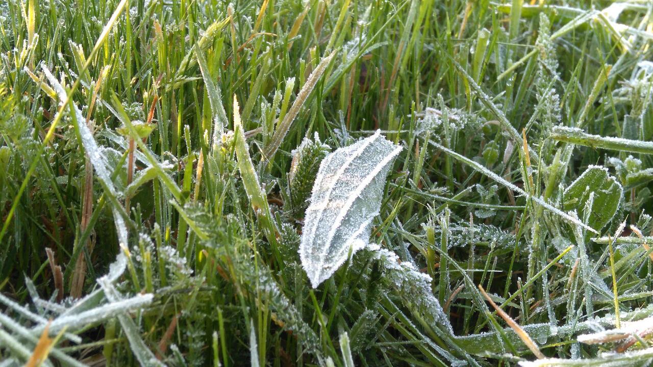 Zziębnięte trawy i zioła o poranku :)