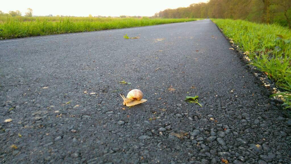 Ślimak na asfaltowej ścieżce rowerowej